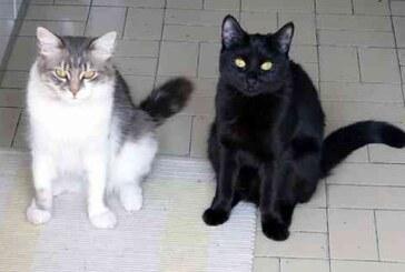Compleanno del gatto: 17 febbraio