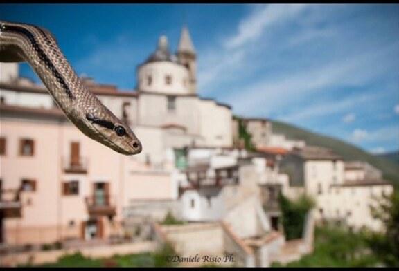 San Domenico e le serpi a Cocullo