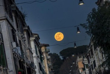 Luna velata